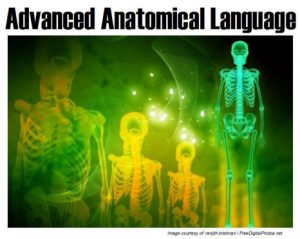 Advanced Anatomical Language cover picture