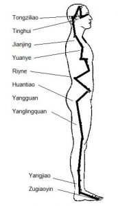 An illustration of the Gall Bladder Meridian