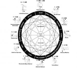A diagram of the Zen Shiatsu Clock used in Traditional Chinese Medicine